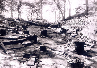 Fossil Grove 1880s